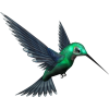 Green Humming Bird image #3489