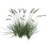 Green Tall Grass Png image #44159