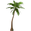 Hd Coconut Tree  Transparent Background image #46406