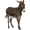 Hd Donkey African Wild Ass Transparent Background image #47499