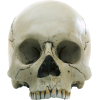 Hd Skull Picture Transparent Background image #47892