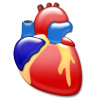 Heart Cardiology Icon image #25444