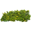 Download And Use Hedges  Clipart image #32438