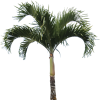 High Quality Real Palm Tree image #43073