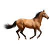 Horse 3d Animal image #22321