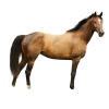 Free Download Of Horse Icon Clipart image #22539