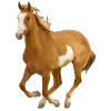 Images Best Clipart Horse Free image #22552