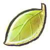Download Leaf Icon image #7079