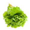 Lettuce Salad  Transparent image #42823