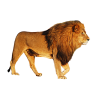 Free Download  Lion Head image #37118