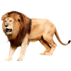 Download Lion Head Icon image #37120