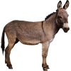 Little Donkey Pictures image #47496