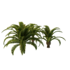 Long Palm Tree Clipart image #43079