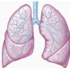 High Resolution Lung  Icon image #25406