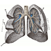 High-quality Lung Cliparts For Free! image #25409
