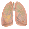 Lung  Clipart Download image #25421