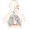 Free Lung Best Clipart Images image #25422
