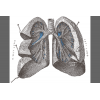 Lung Collection  Clipart image #25425