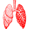Free Download Lung  Images image #25401