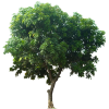 Icon Download Tree image #752