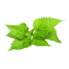 Natural Image Fresh Nettle image #48487