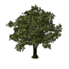 Oak Tree Save Icon Format image #16488