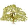 Pictures Icon Oak Tree image #16499