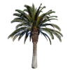 Palm Big  With Alpha Tree thumbnail 43062