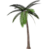 Palm Tree Clip Art  Palm Tree image #43064