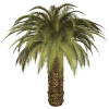 Palm Tree Image image #43058