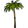 High Resolution Palm Tree  Clipart thumbnail 31900