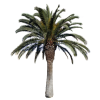 Transparent Palm Tree Background image #31901