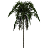 Clipart Download  Palm Tree image #31903