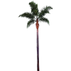Palm Tree Images Best Clipart Free image #31906
