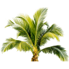 Vectors Download Palm Tree Icon Free image #31909