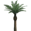 Transparent Hd  Background Palm Tree image #31884