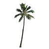 Palm Tree  Available In Different Size image #31885