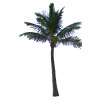Palm Tree  Available In Different Size image #31888