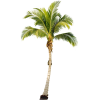 Palm Tree Transparent Image image #43057