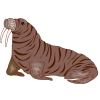 Patterned Walrus Images image #48629