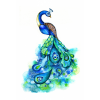 Clipart Peacock Pictures Free image #22881