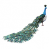 Clipart  Peacock image #22885