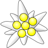 Picture Edelweiss Yellow Circles image #48562