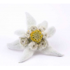 Picture Fluffy White Edelweiss Yellow image #48577