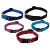 Pictures Color Dog Collar For Pets image #48121