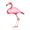 Pink And Red Get Flamingo  Pictures image #47950