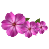 Pink Flower Decor image #17941