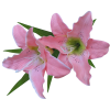 Pink Lilies Clipart image #46489