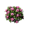 Pink Rose Bushes Icon image #2838
