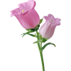 Pink Single Bellflower Transparent image #48709